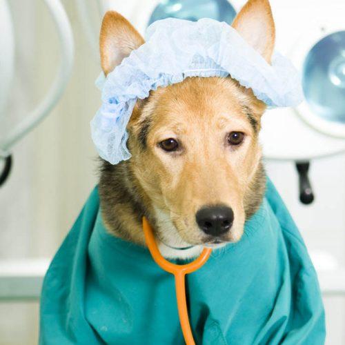 Cerrahi Operasyonlar