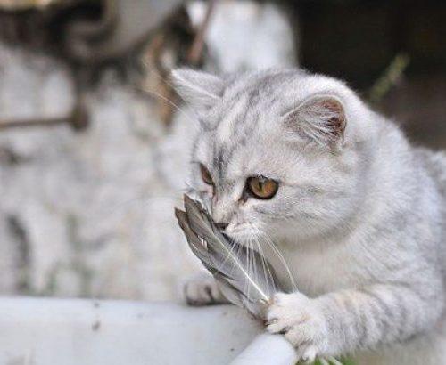 Kedim Çok Tüy Döküyor Ne Yapabilirim