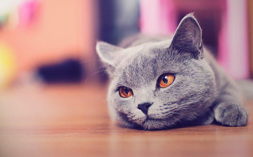 Kediler neden kusar? Kusmalı mıdır?